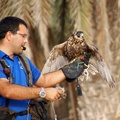 DSC02451-Hawk training demonstration in Dubai desert Conservation Reserve